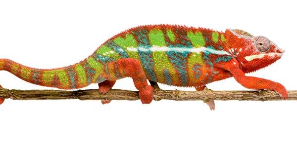 Kameleon_banner.jpg