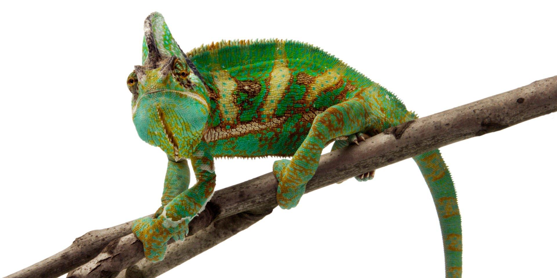 Kameleon_image_large.jpg